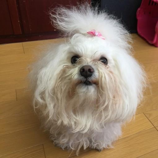 我家のスリーボロズ、明日はお風呂屋さんの予定の限界汚犬