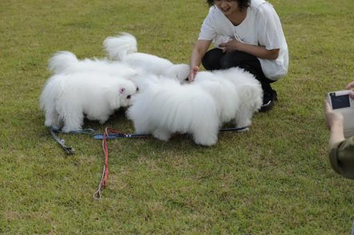ワサワサワサッと、飯塚の人間のママさんの周りに群れます