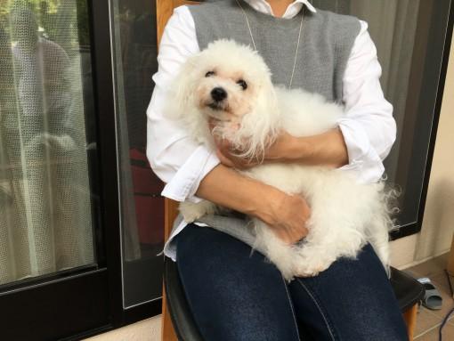 ベイピコ宅にて、ベイピコママさんに抱っこされているのは見慣れないボロちゃん