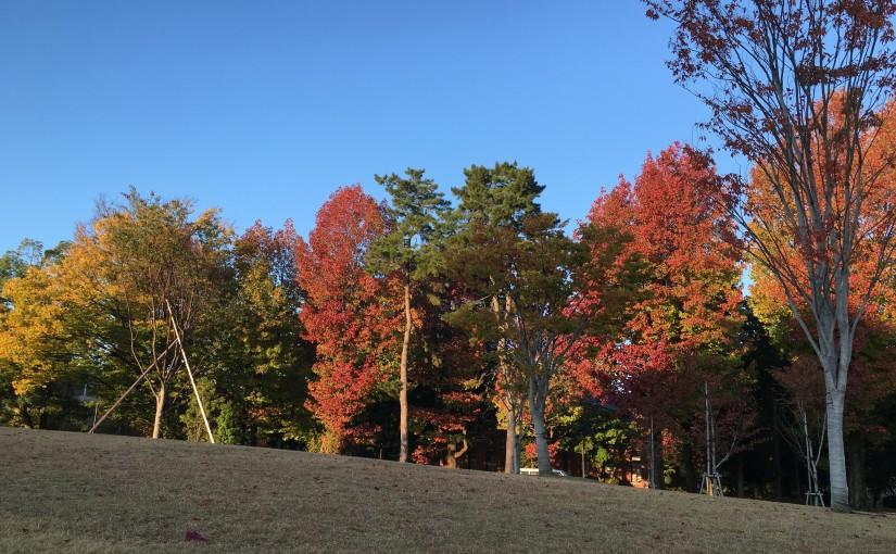 秋晴れの日曜日
